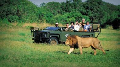Photo of A Holiday in a Safari – An Experience of a Lifetime